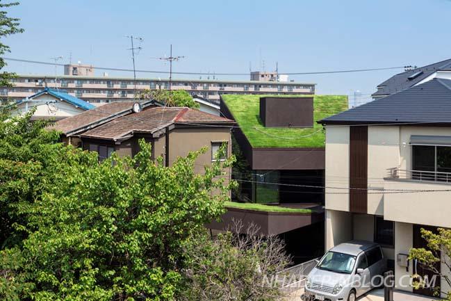 Nhà phố đẹp với mái nhà phủ xanh