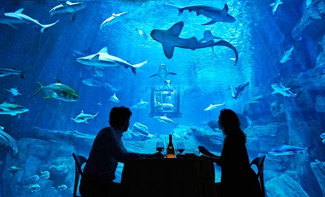 Trải nghiệm mẫu phòng ngủ đẹp giữa đàn cá mập
