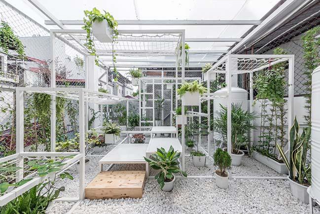 Khu vườn xanh lọc không khí cho nhà phố tại Hà Nội