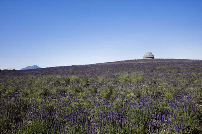 Tượng phật khổng lồ được bao quanh bởi ngọn đồi Lavender