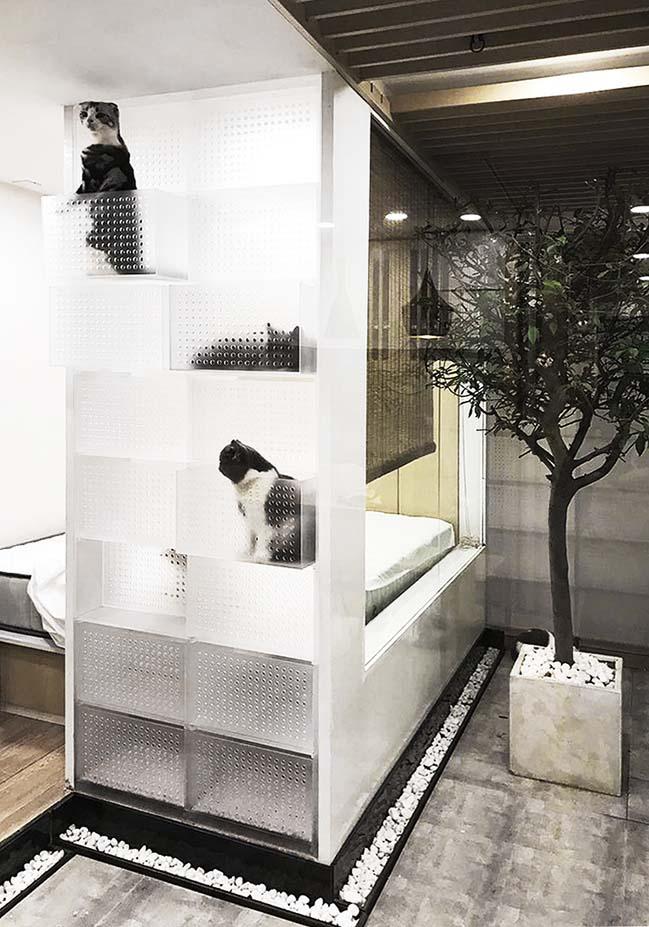 Thiết kế nhà đẹp 31m2 cho cặp vợ chồng và 51 con mèo