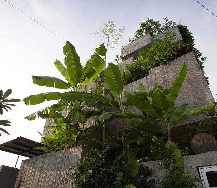 Mẫu nhà đẹp cho những người thích trồng cây